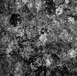 aatp43 -- LP -- THE HATERS/Hal Hutchinson Split